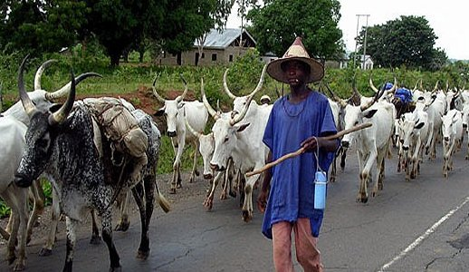 Photo of Relocate to Kano, Gov Ganduje tells herdsmen