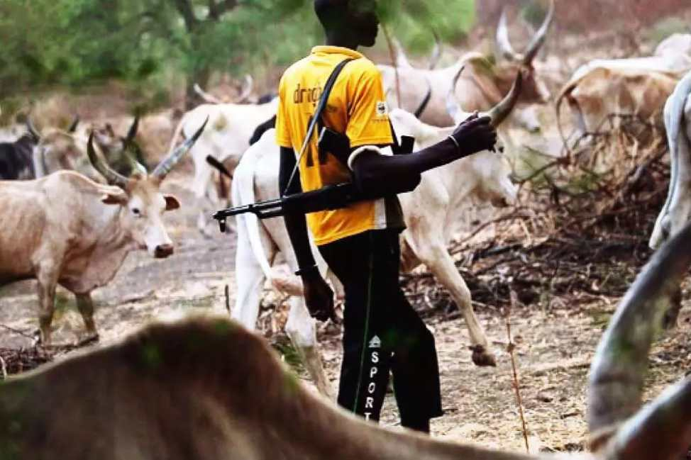 Photo of Fulani herdsmen abandon their cows in Ondo, run for their lives