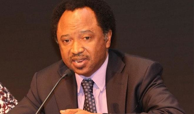 Photo of Rent Your Own Crowd From Sudan- Shehu Sani Blasts El-Rufai