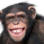 Monkeys Swallow N70m Northern Senators Forum Money, Chairman Suspended