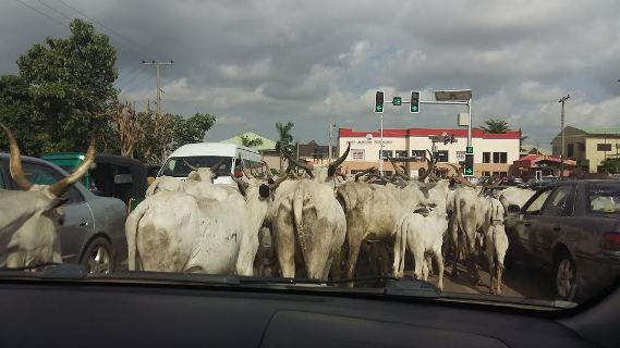 Photo of Ghana Is Not Like Nigeria Where Cattle Roam The Streets – Ghanaian President Mocks Nigerians