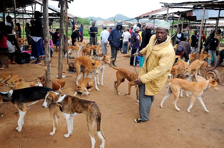 Photo of Killing dogs for meat illegal, court rules