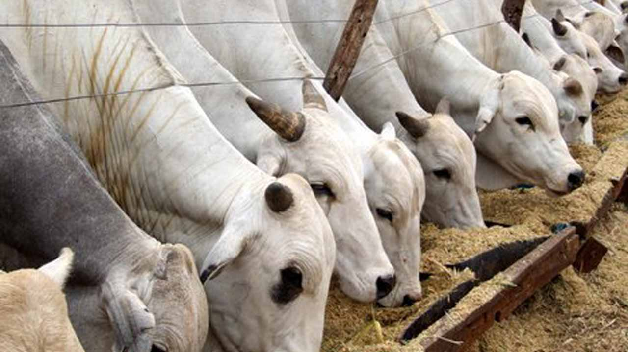 Photo of FG Establishes Cattle Ranches In Oyo, 10 Other States