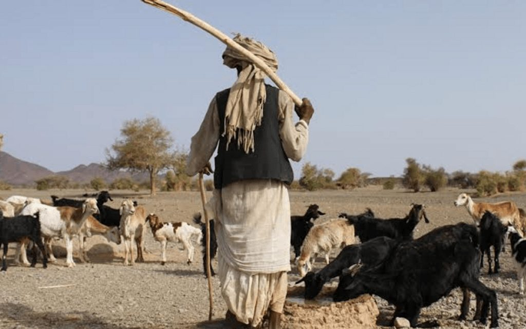 Photo of How Fulani converted Ruga settlements in my community to emirate —Obasanjo's ex-aide