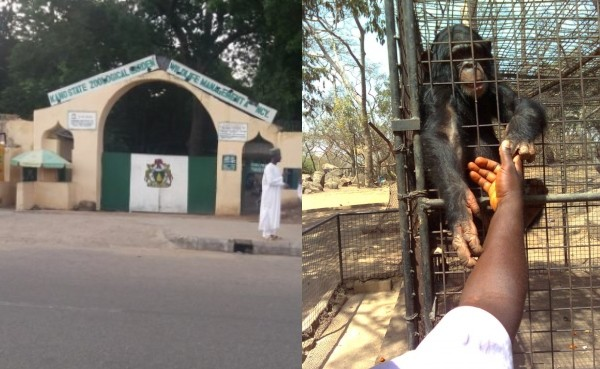 Photo of We'll Not Hesitate To Arrest Gorilla Linked To Swallowed N6.8M in Kano Zoo – Police