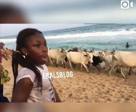 Photo of Drama As Herdsmen Invade Bar Beach With Their Cows In Lagos [PHOTOS]