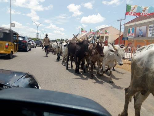 Photo of We're Well Prepared To Defend Ourselves– Herdsmen Vow Not To Relocate From South