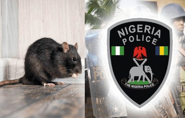 Photo of Drama As Rats Ate Baby's Ear At Anambra Hospital