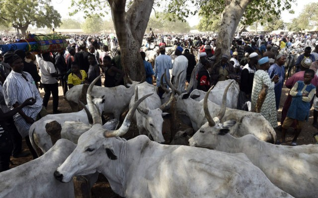 Photo of Support RUGA – PDP BoT Chairman Tells Nigerians