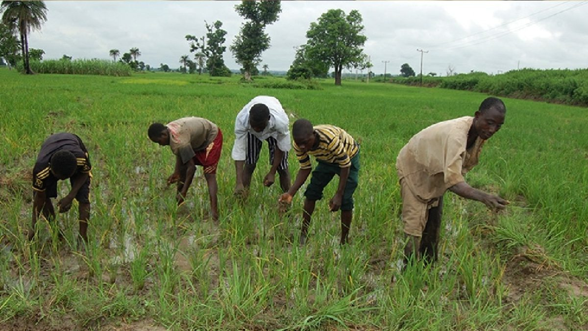 Photo of Nigerian Teachers Turn To Farm To Survive COVID-19 Crunch
