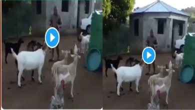 Photo of VIDEO: Man addressing his goat; explaining why he didn't buy their food